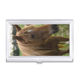 Horse Hello Business Card Holder