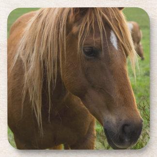 Horse Hello Coaster