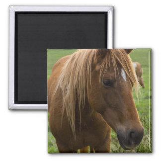 Horse Hello Square Magnet