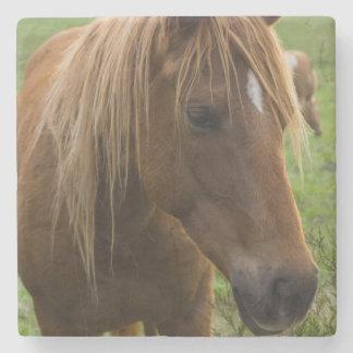 Horse Hello Stone Coaster