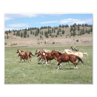 Horse Herd and Cowboy Art Photo