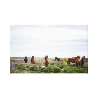 Horse Herd  | Animal Photography Canvas Print