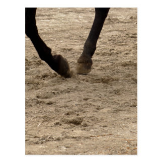 Horse hooves postcard