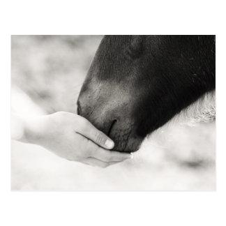 Horse Horse Postcard