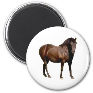 horse horse riding equistrian horse racing magnet