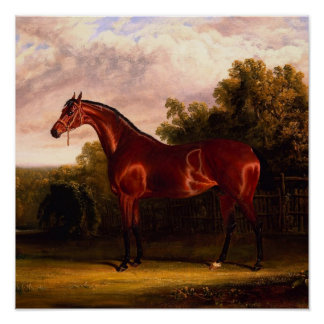 Horse In A Landscape Poster