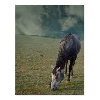 Horse_In_A_Paddock,_ Postcard
