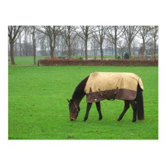 Horse in Meadow Postcard