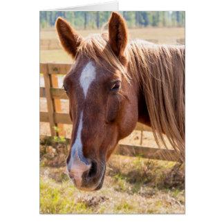 Horse in Sunlight Photograph Blank Inside Card