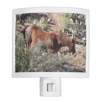 Horse in the Desert Nite Lights