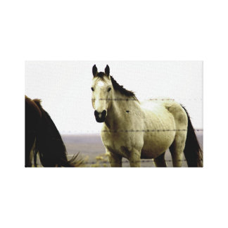 Horse in the Hills Stretched Canvas Prints