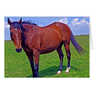 horse in the meadow card