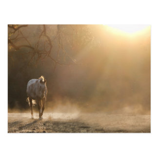 Horse in the sunlight postcard