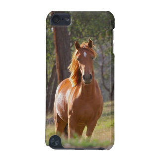 Horse In The Woods iPod Touch (5th Generation) Cases