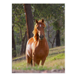 Horse In The Woods Postcard
