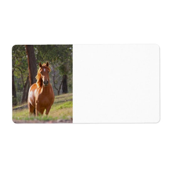Horse In The Woods Shipping Label