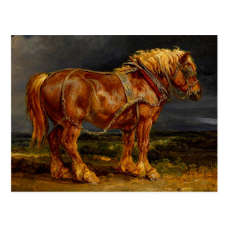 Horse - James Ward Postcard