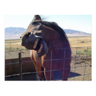 Horse Laughing Postcard