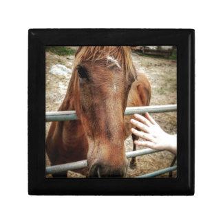 Horse Life Gift Box