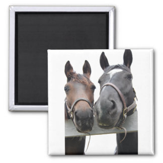 Horse-Love Magnet