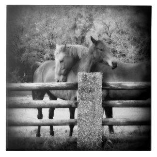 Horse Love - Pair of Horses in Loving Embrace Tile
