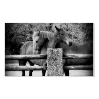Horse Love! Two Horses Hugging Poster