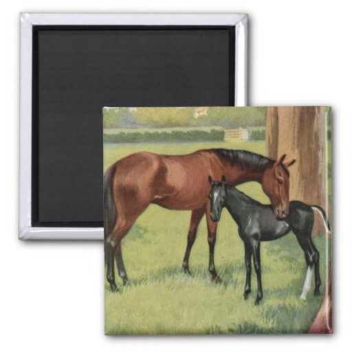 Horse Mare Foal Equestrian Vintage Image Refrigerator Magnets