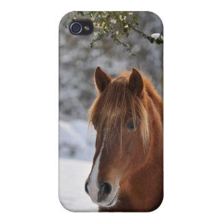 Horse & mistletoe iPhone 4 cases