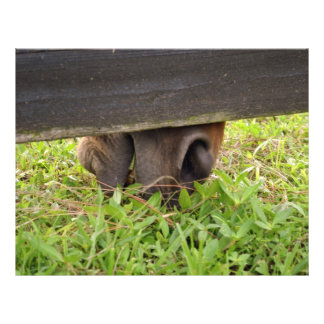 Horse nose grazing under fence flyer