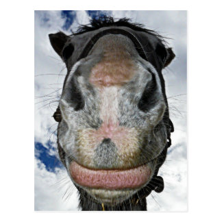 Horse Nose Knows! Funny Smiling Horse Postcard