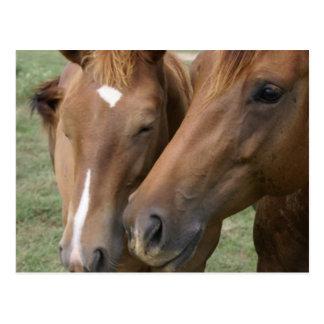 Horse Nuzzle Postcard