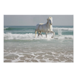 Horse Ocean Beauty Print