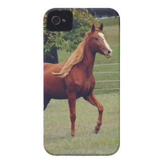 Horse Photograph iPhone 4 Case Mate Case