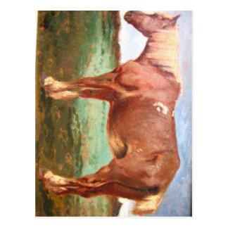 Horse Portrait by Constant Troyon Postcard