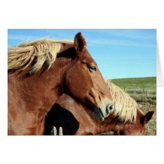 Horse Portriat Card