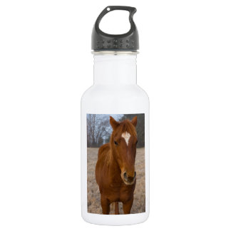 Horse pose 532 ml water bottle