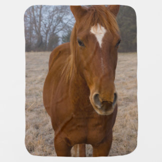 Horse pose baby blanket