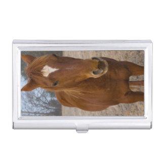 Horse pose business card holder