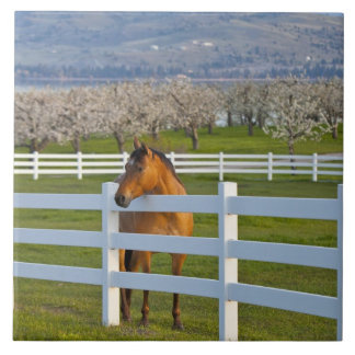 Horse poses by Flathead Cherry orchard near Ceramic Tiles