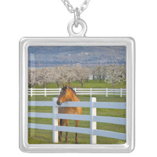 Horse poses by Flathead Cherry orchard near Silver Plated Necklace