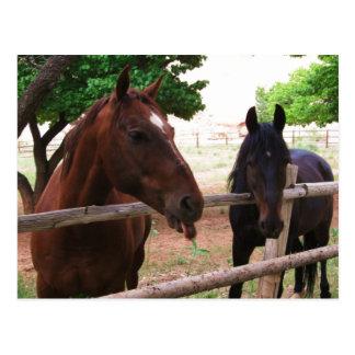 Horse Raspberries! Postcard
