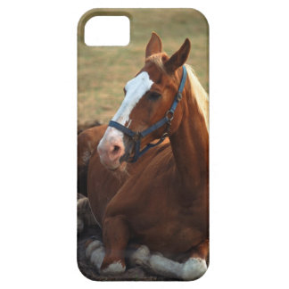 Horse resting on grass, close-up iPhone 5 cover