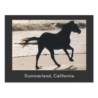 Horse Running on the Beach at Summerland, CA Postcard