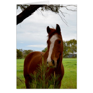 Horse_Sniff_Birthday_Greeting_Card Card