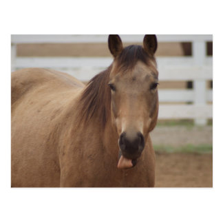 Horse sticking tongue out postcard