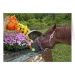 Horse Thanksgiving Greeting Cards