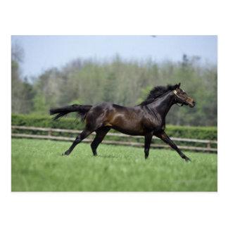 Horse Thoroughbreds, Wassl 1988, Postcard