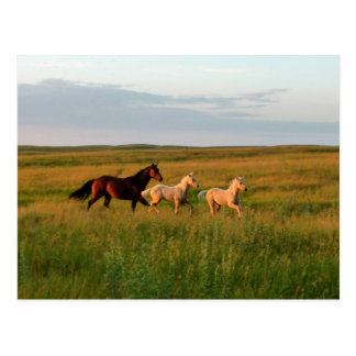 Horse Twins Mare and Foals Horse Babies Postcard