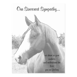 Horse Veterinarian Sympathy Postcard