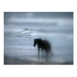 Horse walking the beach Newport Rhode Island Postcard
